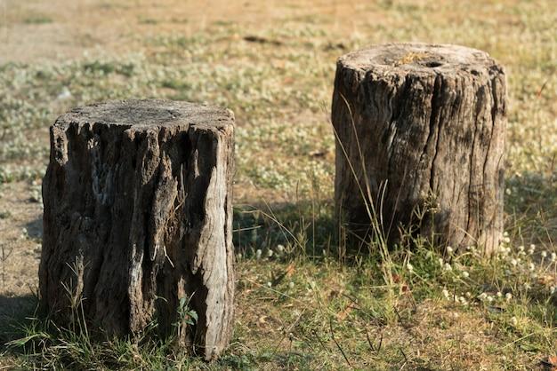 Planta de árvore de coto no campo de grama verde