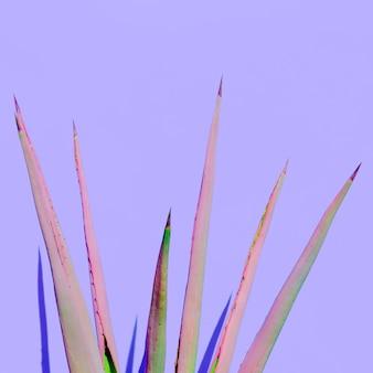 Planta de babosa design mínimo ao ar livre