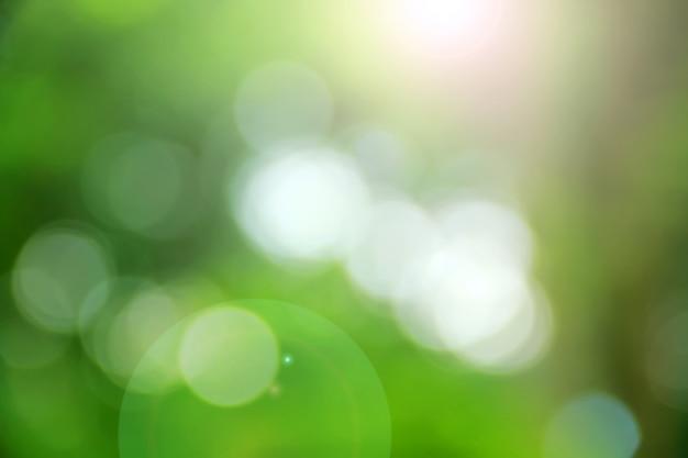 Planta de bokeh verde. fundo abstrato verde
