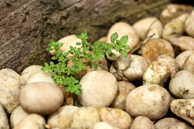 Planta de broto verde com pedra