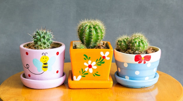 Planta de cacto na decoração de vasos em cima da mesa