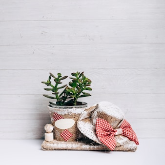 Planta de cacto no pote de saco com chapéu contra o pano de fundo de madeira