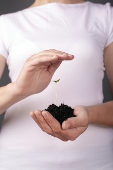 Planta de cânhamo brotam nas mãos.