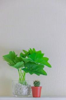 Planta de casa e cacto em uns potenciômetros bonitos na prateleira de madeira na parede branca com espaço da cópia. design de decoração de estilo minimalista.