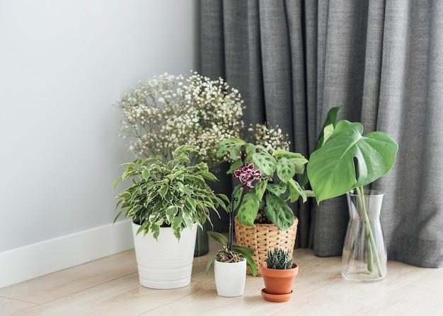 Planta de casa em casa