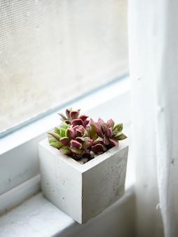 Planta de casa em um vaso de concreto no parapeito de uma janela dentro de uma sala