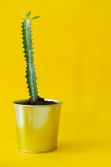 Planta de casa em vaso