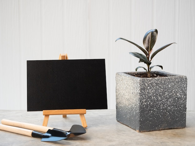 Planta de casa ficus elastica burgundy ou planta de borracha com folhas pretas em ferramentas modernas de contenção de jardinagem e borard preto em piso de cimento com superfície de madeira branca
