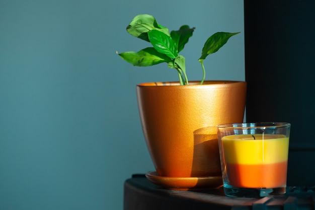 Planta de casa spathiphyllum em vaso de cerâmica e vela dentro de casa