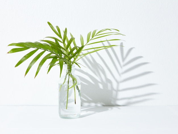 Planta de casa verde em uma jarra de vidro