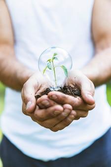 Planta de conceito em bulbo de vidro