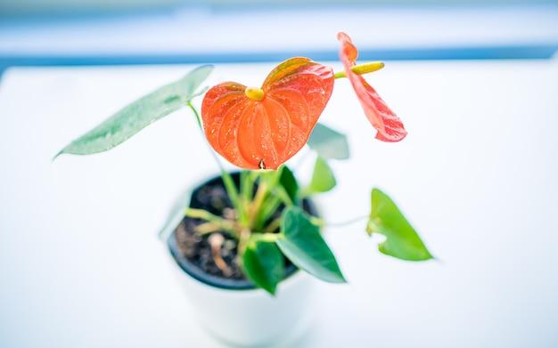Planta de decoração de interiores