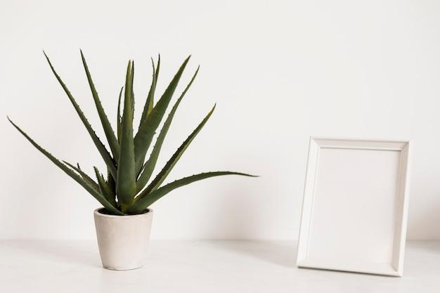 Planta de escritório ao lado do quadro