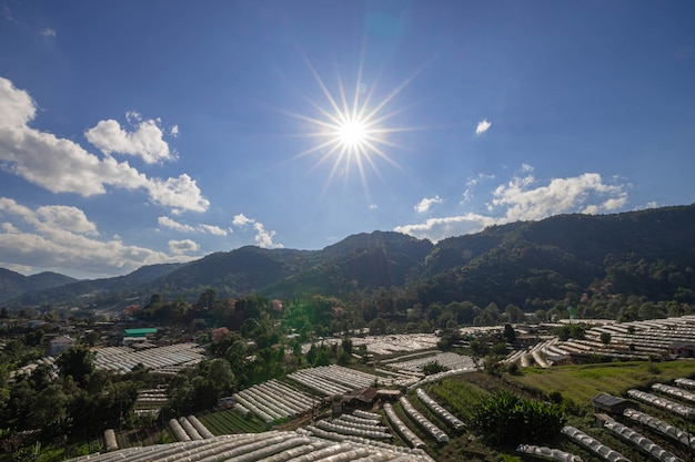 Planta de estufa e sol, montanha de doi inthanon, província de chiang mai, paisagem tailândia.