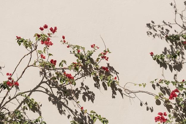 Planta de flor vermelha e sombras de luz do sol na parede bege neutra