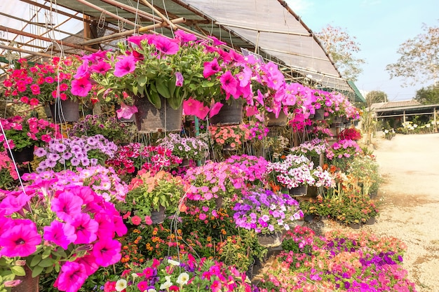Planta de flores cor de rosa em panela no jardim.