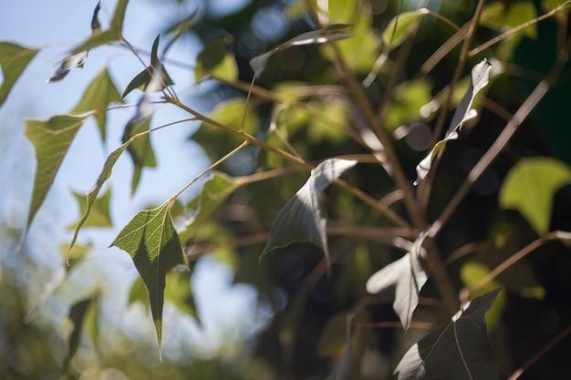 Planta de hera cresce em um jardim verde