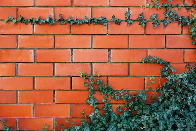 Planta de hera em uma parede de tijolo vermelho.