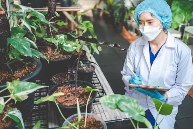 Planta de jardim agrícola em uma estufa moderna, flor da natureza em fazenda, plantação de folhas de vegetais para alimentos orgânicos, indústria cultivada de horticultura botânica, crescimento de sementes com ambiente de luz solar