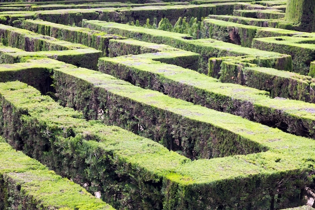 Planta de labirinto no parc del laberint de horta em barcelona