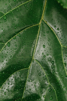 Planta de leafe verde
