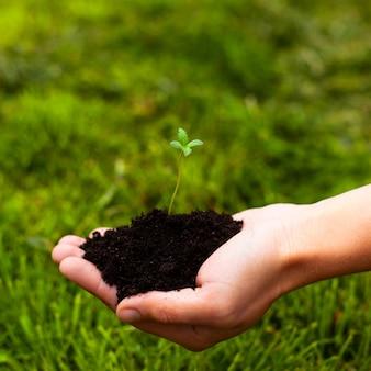 Planta de marijuana nova na palma da mão em um fundo de close-up de grama verde. brotar cânhamo médico nas mãos.
