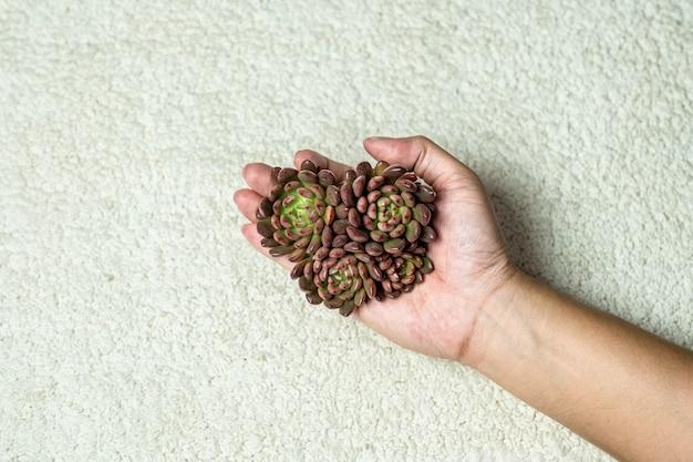 Planta de plantas suculentas flatlay, vista superior
