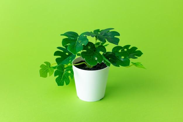 Planta de plástico verde gramínea em vasos sobre fundo verde isolada
