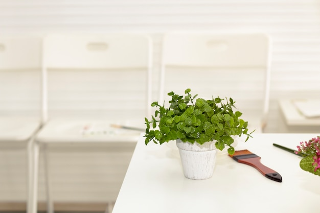 Planta de potenciômetro verde pequena bonita e pincel na sala de visitas.