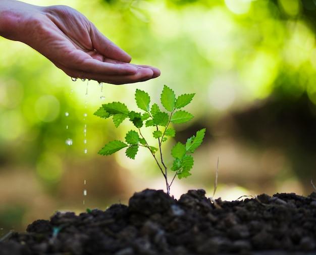 Planta de rega de mão de homem