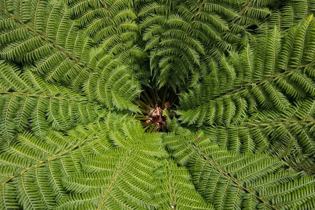 Planta de samambaia verde