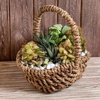 Planta de terrário em cesta com mesa de madeira