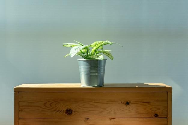 Planta decorada em um quarto de apartamento.