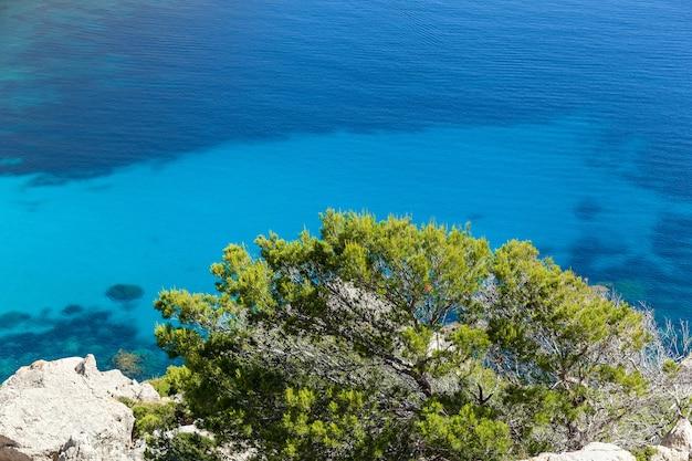 Planta e água. perto do arbusto verde na praia rochosa contra o azul do mar mediterrâneo.