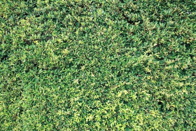 Planta e árvore no jardim. deixa o fundo e o papel de parede natural