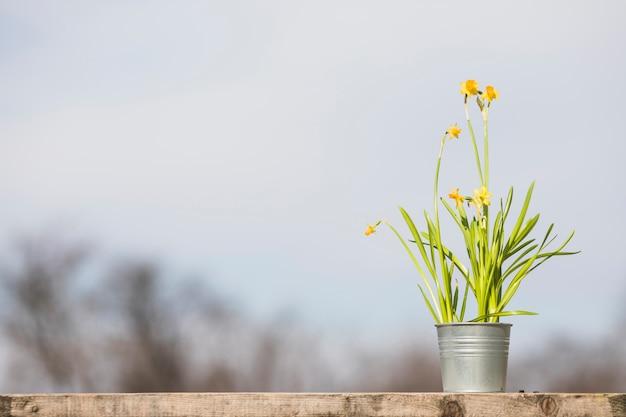 Planta e jardim ainda vida