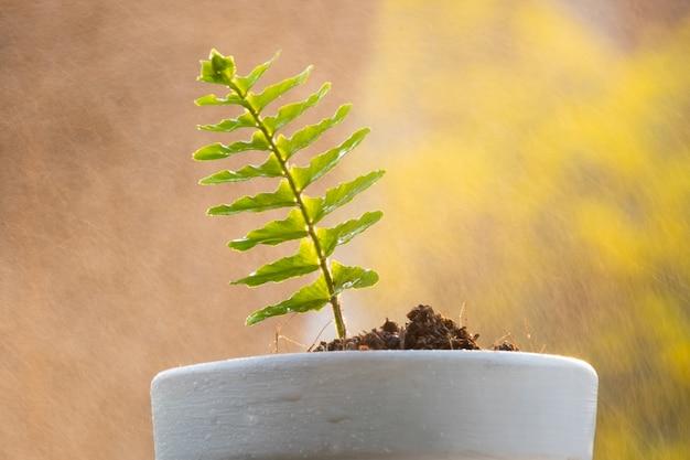 Planta e solo do broto no potenciômetro da árvore com o pulverizador de água no fundo.