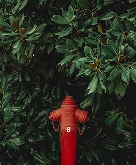 Planta e tubo vermelho