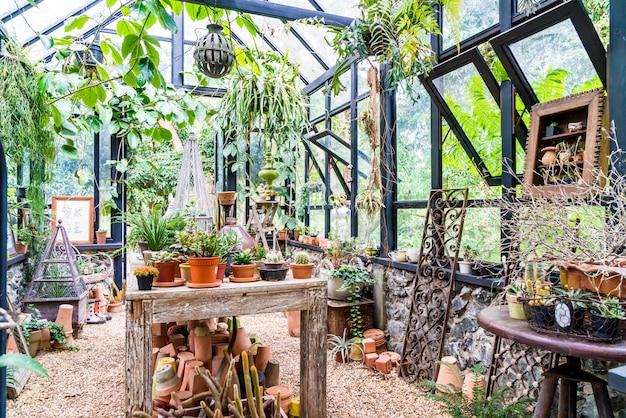 Planta em casa de vidro