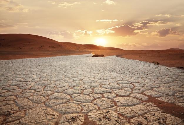 Planta em crescimento em terra seca