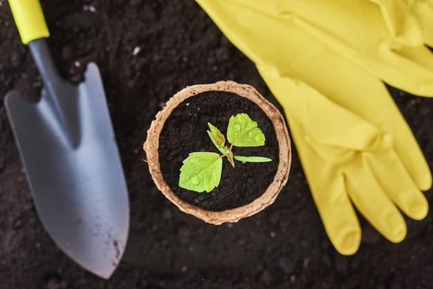 Planta em panela, pequena pá e luvas amarelas em mudas