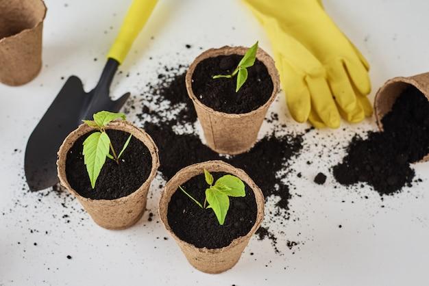 Planta em panela, pequena pá e luvas amarelas