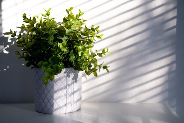 Planta em vaso de cerâmica com luz e sombra, conceito de minimalismo.