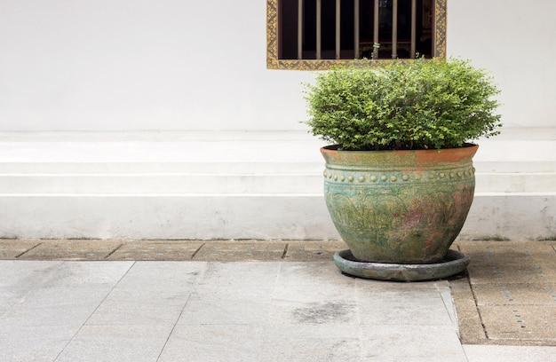 Planta em vaso de jardim com fundo de parede branca