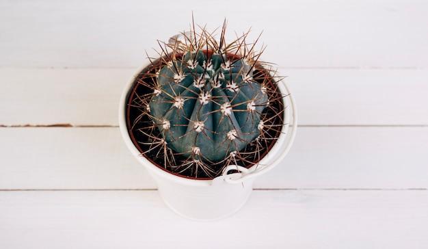 Planta espinhosa de cacto em balde branco na mesa de madeira