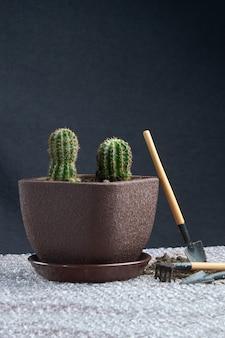 Planta home de cacto na mesa com ferramentas de jardim