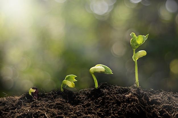 Planta jovem crescendo e fundo verde bokeh