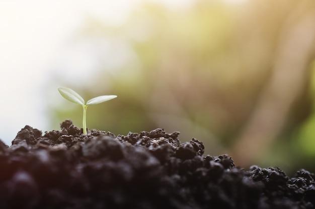 Planta jovem crescendo no fundo da luz solar, muda de planta