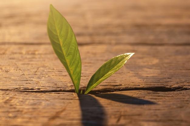 Planta jovem crescente passo no jardim com luz solar.