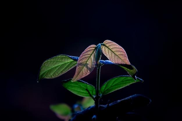 Planta jovem e fresca crescendo sob a luz do sol, folhas brilhando e refletindo com a luz do dia natural